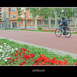 at the park by David Rodriguez - Landscapes Travel ( castellon, exteriors, park, color, flower )