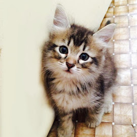 My Little Kitty by Nor Aniza - Animals - Cats Kittens (  )