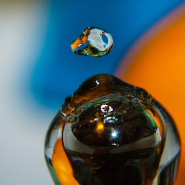 Wavering  by Micaela Lafferty - Novices Only Macro ( fruit, macro, citrus, water droplet, lemon )