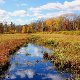 Last Look at Fall by Scott Block - Landscapes Prairies, Meadows & Fields ( water, st. croix state park, minnesota, fall colors, nature, fall, landscape,  )
