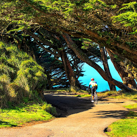 Cyclist by Carol Plummer - Transportation Bicycles ( point reyes, cyclist, california, beach, landscape )