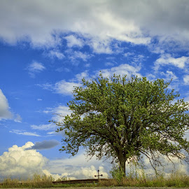 The tree and the cross by Mirela Savu - Landscapes Cloud Formations ( clouds, nature, tree, blue, green, white, cross )