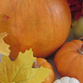 by Dawn Price - Food & Drink Fruits & Vegetables ( pumpkin, fall )
