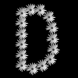 by Dipali S - Typography Single Letters ( d, nature, letter, illustration, daisy, alphabet, typography, flower )