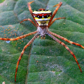 by Kanchan D - Animals Insects & Spiders