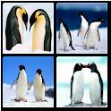 Penguins Live Wallpaper