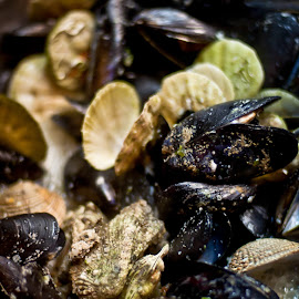 shells by Stefan Mihailovic - Food & Drink Plated Food ( shells, food, croatia, sea )