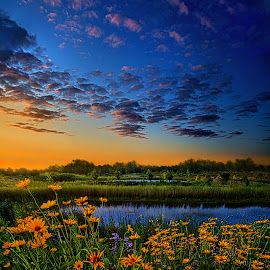 The Day Is Coming by Phil Koch - Landscapes Prairies, Meadows & Fields ( vertical, photograph, farmland, yellow, storm, leaves, love, sky, nature, tree, autumn, snow, flower, wind, orange, twilight, daisies, agriculture, horizon, portrait, dawn, environment, season, national geographic, serene, trees, floral, inspirational, wisconsin, natural light, phil koch, spring, photography, sun, farm, horizons, rain, inspired, clouds, office, park, green, scenic, morning, shadows, wild flowers, field, red, blue, sunset, fall, peace, meadow, summer, sunrise, earth, landscapes )