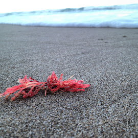Sexy Seaweed by Elaine Alberts - Nature Up Close Water ( #sand, #sea, #seaweed )