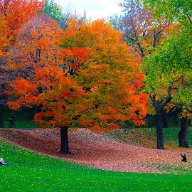 Mount Royal Park by Marco Antonio - City,  Street & Park  City Parks ( cnada, mountains, quebec, neighbourhoods, parks, 'montreal )
