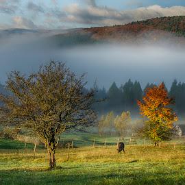 Landscape by Ovidiu Marinoiu - Landscapes Mountains & Hills ( hills, animals, tree, fog, trees )
