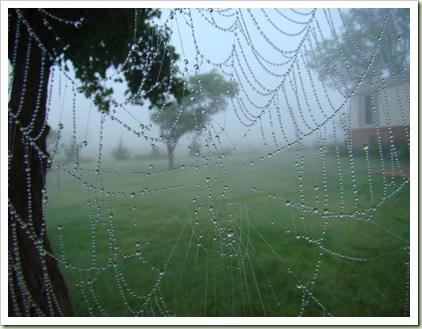 08-20-08 Spiderwebs 014