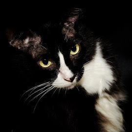 Avant Cat by Mohd Izwan - Animals - Cats Portraits ( cat face, cat, black and white, cat portrait, b & w, avant garde,  )