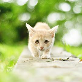 the orange by Noor Helmie - Animals - Cats Kittens