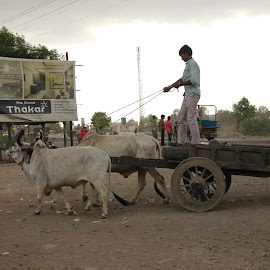 Bullock Cart by Thakkar Mj - Transportation Other ( bullock cart, cart, india, transportation, bullock )