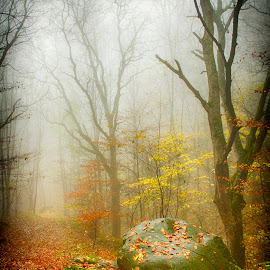 Forest and fog by Costin Mugurel - Nature Up Close Trees & Bushes ( mountains, fog, autumn, rock, forest, carpathians )