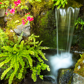 waterfall over rocks in garden by Kathy Dee - Nature Up Close Gardens & Produce ( water, green, waterfall, white, plants, moss, spring, ferns, red, fall, feature, flowers, rocks, garden,  )