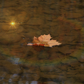 Magic by Marsha Biller - Nature Up Close Other Natural Objects ( water, rainbow ring, floating, leaf )