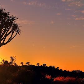 Kokerboom oggend by Efraim van der Walt - Landscapes Sunsets & Sunrises ( quivertrees, sunrise, africa, namibia,  )