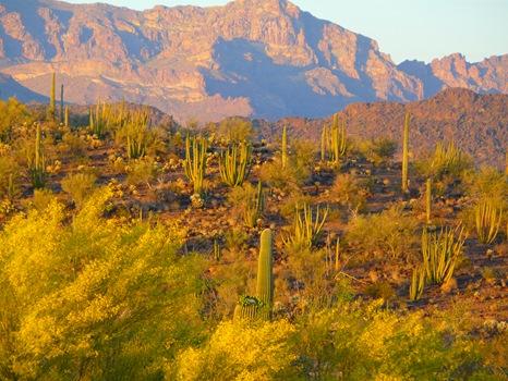 Arizona Trip 08 102