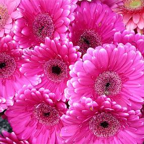 ROSA MEXICANO by Jose Mata - Flowers Flower Arangements