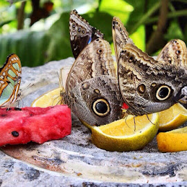 Butterfly Brunch by Oscar Medina - Animals Insects & Spiders