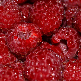 Fresh Raspberry Snack by Kevin Dietze - Food & Drink Fruits & Vegetables