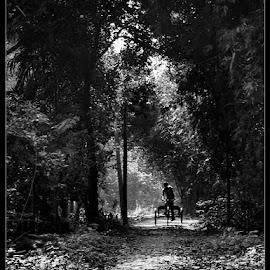 by Tarunabha Dey - Transportation Bicycles (  )