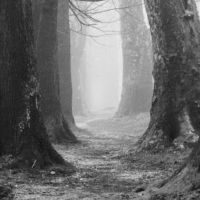 by Yasin Akbaş - Landscapes Forests