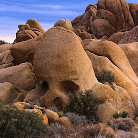 Skull Rock in Joshua Tree National Park by Brent Morris - Nature Up Close Rock & Stone