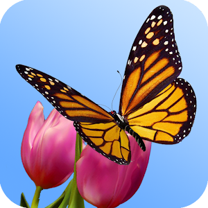3D Butterfly Garden Wallpaper