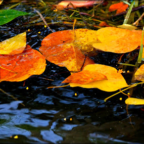 Leaves in Backwaters by Vijayendra Venkatesh - Nature Up Close Leaves & Grasses ( water, colors, leaves )