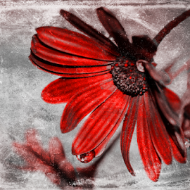 by Dipali S - Digital Art Things ( red, nature, flora, art, digital, flower, animal, butterfy, color, colors, landscape, portrait, object, filter forge )
