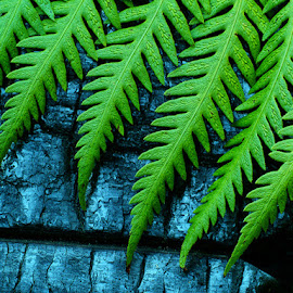 Fern on Burn by Mike Moats - Nature Up Close Other plants