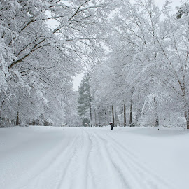 Snow In N.C. by Roy Walter - News & Events Weather & Storms ( news, ice, snow, weather, storm,  )