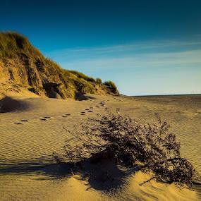 roanhead beach by Gareth Fleming - Landscapes Beaches ( sand, sunset, bush, beach )