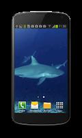Screenshot of Shark Video Wallpaper Free