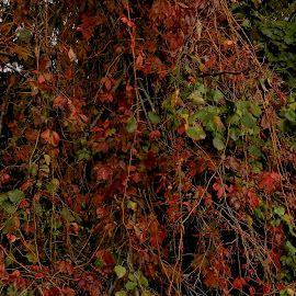 by Bojan Rekic - City,  Street & Park  City Parks ( fall, color, colorful, nature )