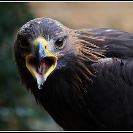 by Martin Mourek - Animals Birds