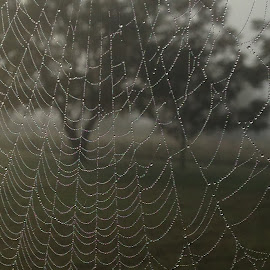 Morning Dew by Corena Boyd - Nature Up Close Webs