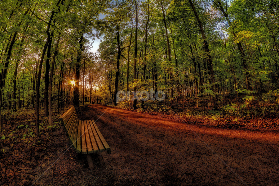 by Otto Mercik - City,  Street & Park  City Parks ( , Lighting, moods, mood lighting, public, bench, furniture, object, golden hour, sunset, sunrise )