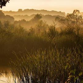 Fog by Ева Йорданова - Landscapes Weather ( fog, green, lake, morning, rain,  )