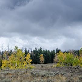 by Tamar Epstein - Landscapes Prairies, Meadows & Fields