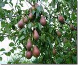 Fruits.jpg 3