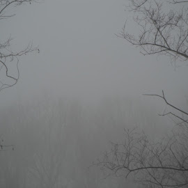 Foggy Morning by Kristina  Dorsett - Nature Up Close Trees & Bushes ( fog, trees in fog, trees, nature up close, landsacpe )
