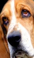 Screenshot of Dogs Funny Wallpaper