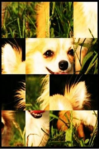 かわいい犬パズルfree1