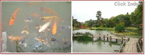 Jardim Japones (Blog)4