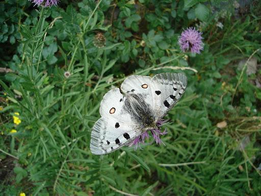 papillon macro photographie