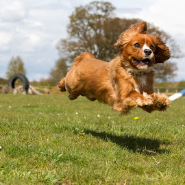 Hover Dog by Del Waghorn - Animals - Dogs Running ( dog, running )